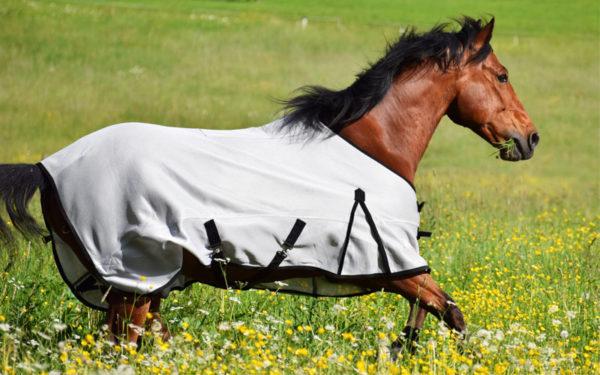 pferdedecke-shs-sommerdecke